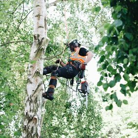a man climbing a tree with chainsaw