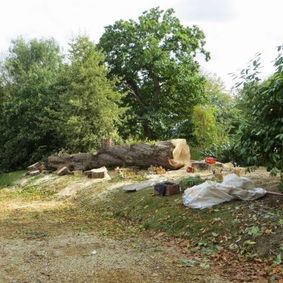 Tree removal service Leicester, Tree felling Leicester