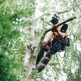 a man climbing a tree cutting branches